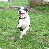 Adopt A Pet :: Walker aka Guest - Eugene, OR