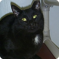 Adopt A Pet :: Gracie - Hamburg, NY