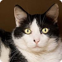 Adopt A Pet :: Thomas - Fountain Hills, AZ