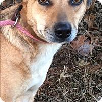 Adopt A Pet :: Gabee - Westwood, NJ