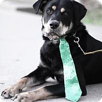 Adopt A Pet :: Bennie - Dallas, TX