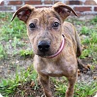 Adopt A Pet :: Kouki - Ocala, FL