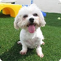 Adopt A Pet :: April - House Springs, MO