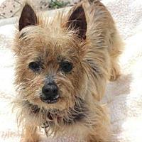 Adopt A Pet :: CHARLIE - Wainscott, NY