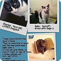 Adopt A Pet :: Charles - Randallstown, MD