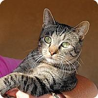 Adopt A Pet :: Crunches - Palmdale, CA