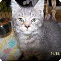 Adopt A Pet :: Basil - Riverside, RI