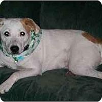 Adopt A Pet :: *Lucky - Winder, GA