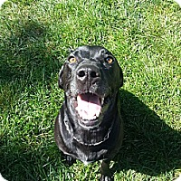Adopt A Pet :: Bubba ~ Adoption Pending - Youngstown, OH
