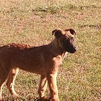 Adopt A Pet :: Aeron - Wattertown, MA