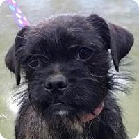 Adopt A Pet :: Pumpkin - Fresno, CA