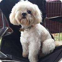 Adopt A Pet :: KRISTAL - Los Angeles, CA