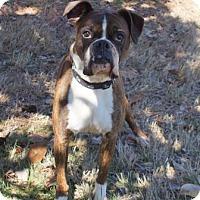 Adopt A Pet :: Tyson (D17-016) - Lebanon, TN