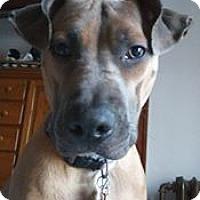 Adopt A Pet :: Grace D3329 - Shakopee, MN