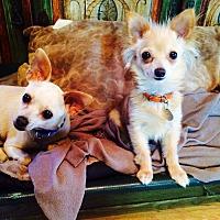 Adopt A Pet :: Cha Cha - Santa Monica, CA