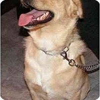 Adopt A Pet :: Tripper - Rigaud, QC