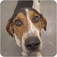 Adopt A Pet :: Marshall - Phoenix, AZ