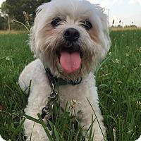 Adopt A Pet :: Rocket - Russellville, KY