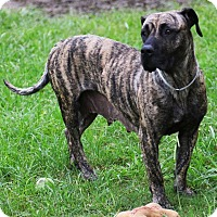 Adopt A Pet :: Penelope - Missouri City, TX