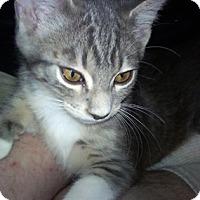 Adopt A Pet :: Babu - North Highlands, CA