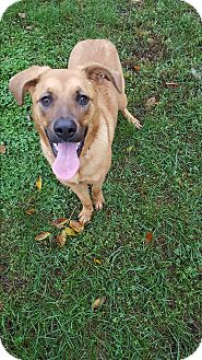 Shepherd (Unknown Type) Mix Dog for adoption in Indianola, Iowa - Angel