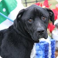 Adopt A Pet :: Vincent (Neutered) - Marietta, OH