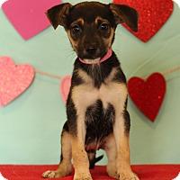 Adopt A Pet :: Lana - Waldorf, MD