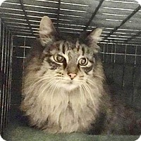 Adopt A Pet :: Jasper - East Brunswick, NJ