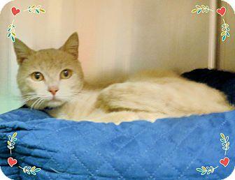 Domestic Shorthair Cat for adoption in Marietta, Georgia - FINN-available 3/26
