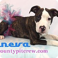 Adopt A Pet :: Geneva - Toledo, OH