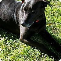 Adopt A Pet :: Hawkins - Brattleboro, VT