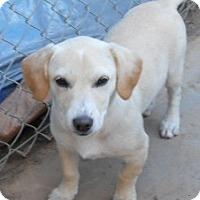 Adopt A Pet :: Sandy - dewey, AZ
