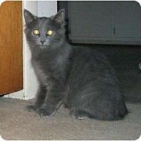 Adopt A Pet :: Daniel - Cincinnati, OH