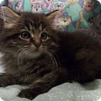 Adopt A Pet :: Whiskas - Acme, PA