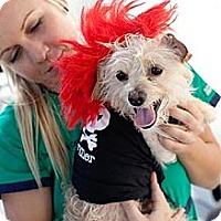 Adopt A Pet :: Richi - Mission Viejo, CA