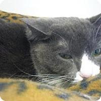 Adopt A Pet :: Pinky - Milwaukee, WI