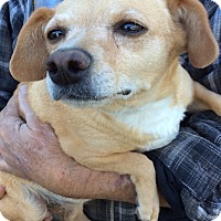 Adopt A Pet :: Sandy - Simi Valley, CA
