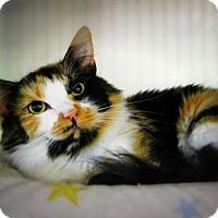 Adopt A Pet :: Lizburn - Casa Grande, AZ