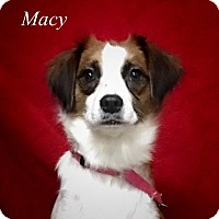 Adopt A Pet :: Macy - Chester, IL