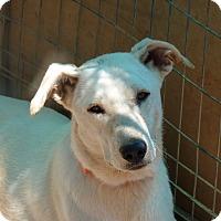 Adopt A Pet :: Penny - Toronto, ON