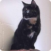 Adopt A Pet :: Ali McClaw - Orangeburg, SC