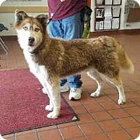 Adopt A Pet :: Arnold - St. Cloud, FL