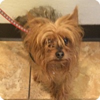 Adopt A Pet :: Kyle - Oak Ridge, NJ