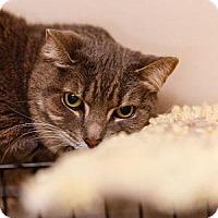 Adopt A Pet :: Fearless - Decatur, GA
