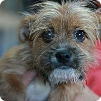 Adopt A Pet :: Romeo - Canoga Park, CA