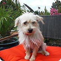 Adopt A Pet :: QUINN - Mission Viejo, CA
