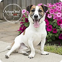 Adopt A Pet :: Ziggy - Troy, OH