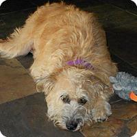 Adopt A Pet :: HARRIET - Phoenix, AZ