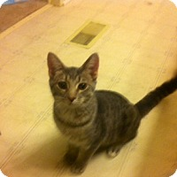 Adopt A Pet :: Brian and Stewie(bonded) - Sterling Hgts, MI