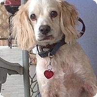 Adopt A Pet :: Jingles - Santa Barbara, CA